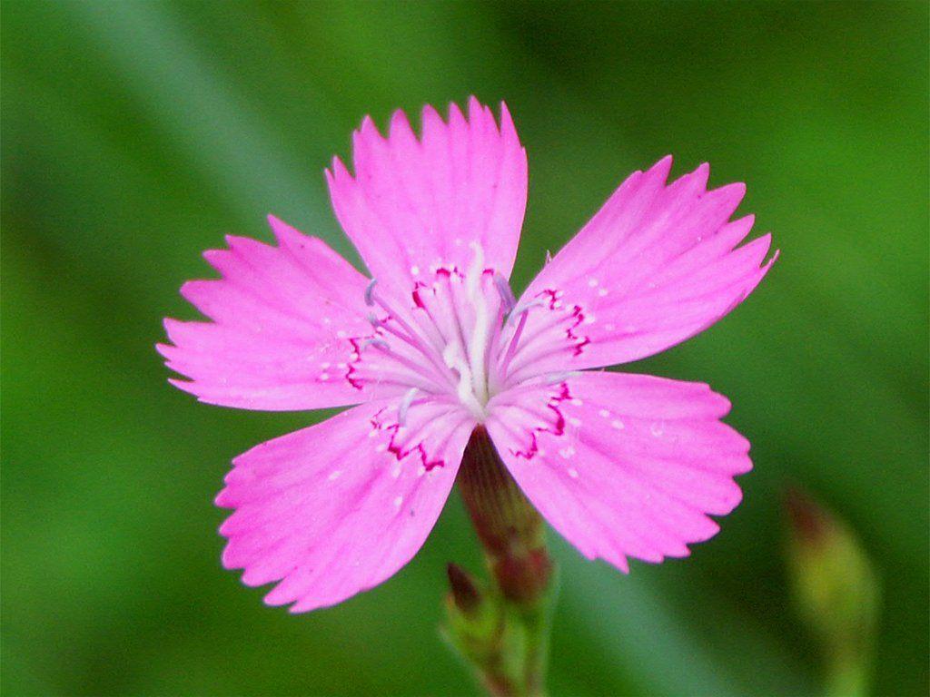Kwiaty Related Keywords & Suggestions - Kwiaty Long Tail Keywords